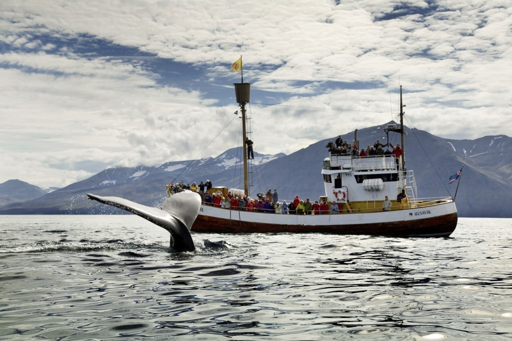 Humpback_passing_Nattfari
