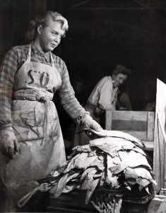 Ein viktar saltfisk