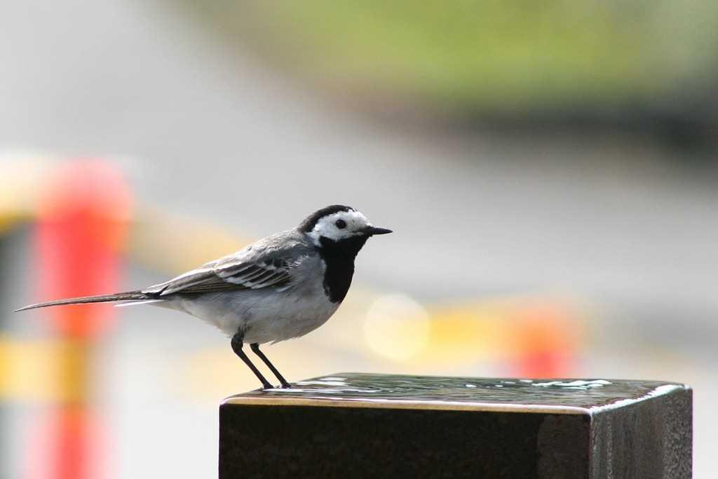 birdforamillion2
