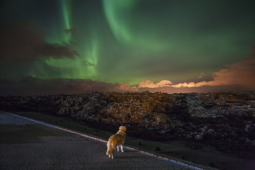 Max enjoying the Aurora Borealis