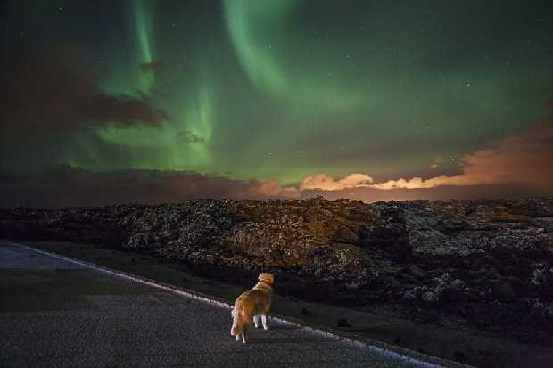 Max enjoying the Aurora Borealis