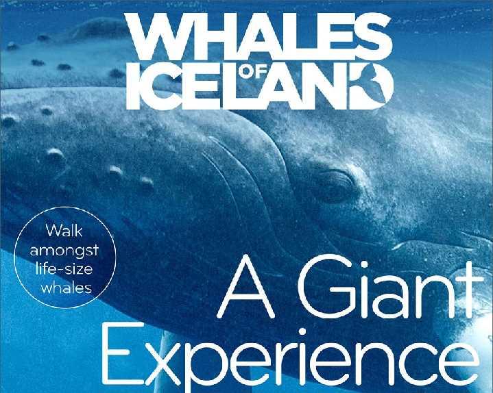 Musee-des-Baleines-slande