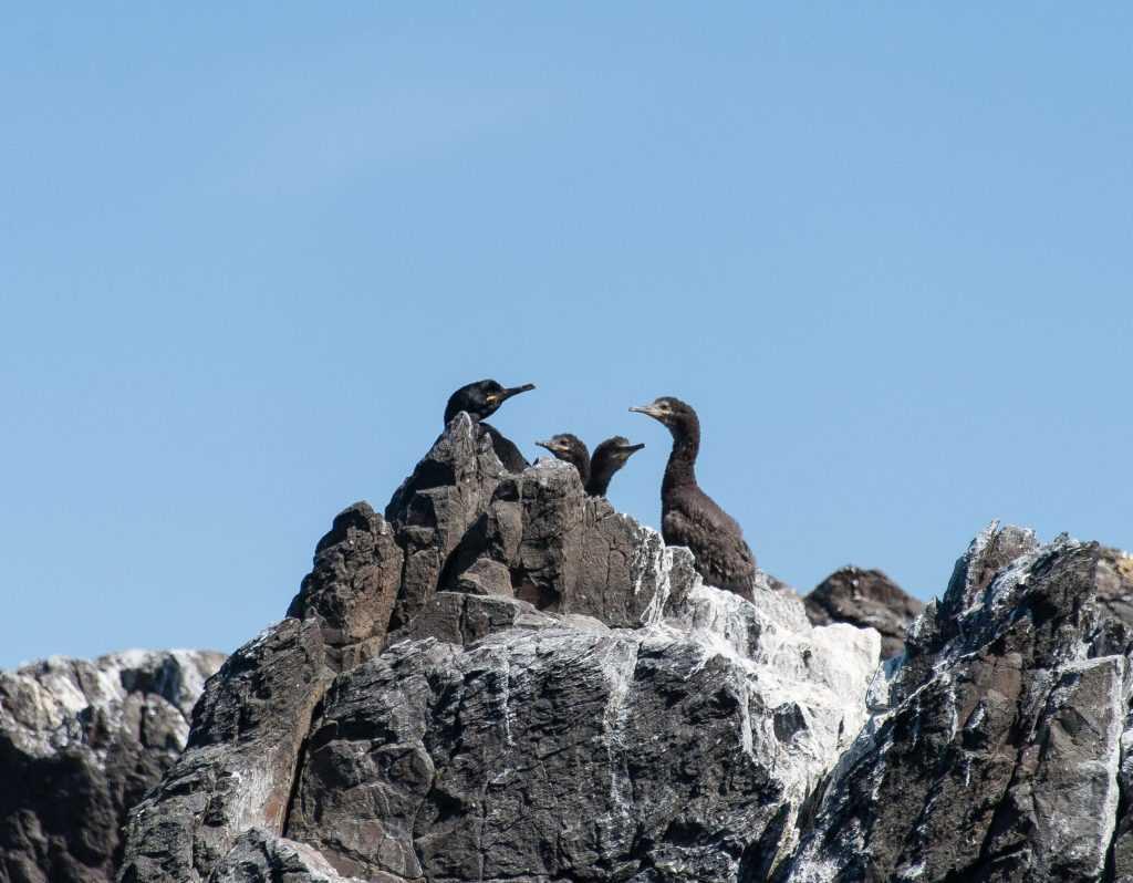 Skaleyjar og Flatey 20120623-25