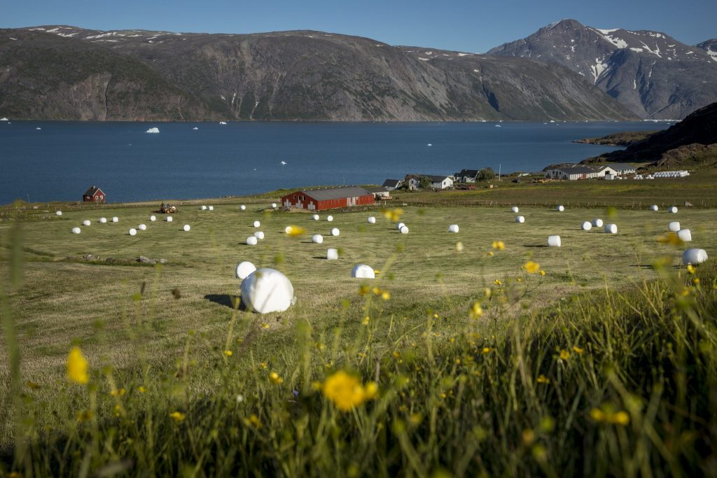 South-Greenland-2015-70 icelandic times
