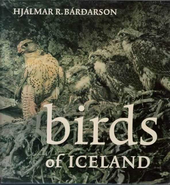 birdsoficeland_2