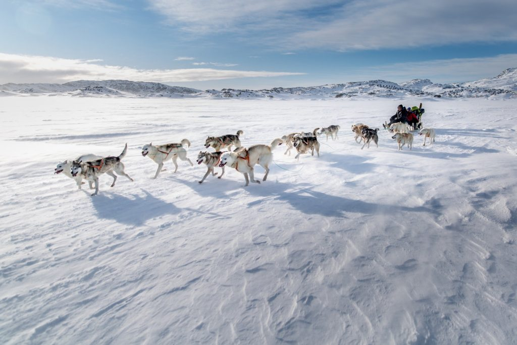Greenland dogsled tour