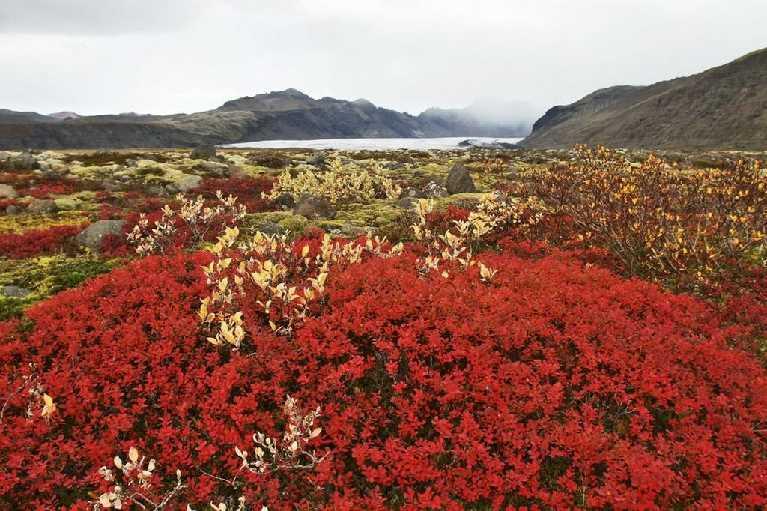 tingvellir-fridtjofur-helgason-iceland