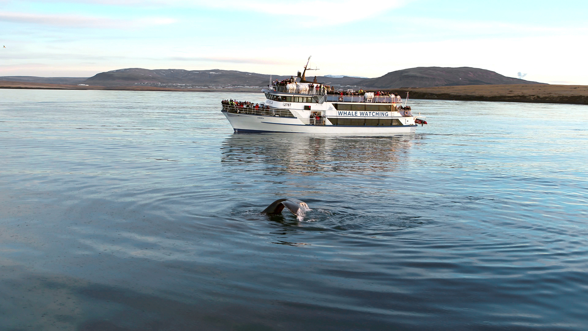 Whale Watching Reykjanes