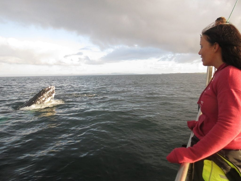 Whale Wathcing Reykjanes
