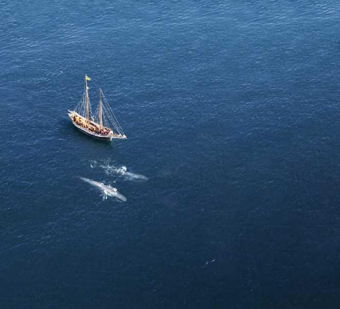 Blue whale Húsavik