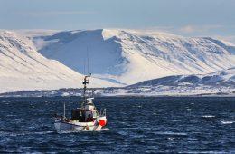 Finnafjörður Harbour Project