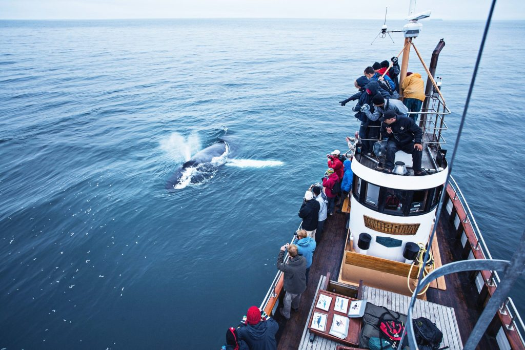 Close whale encounter North Iceland