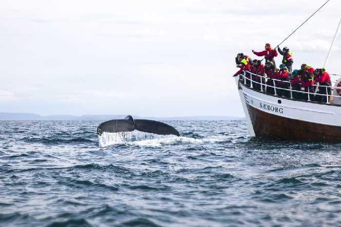 Húsavik whale watching