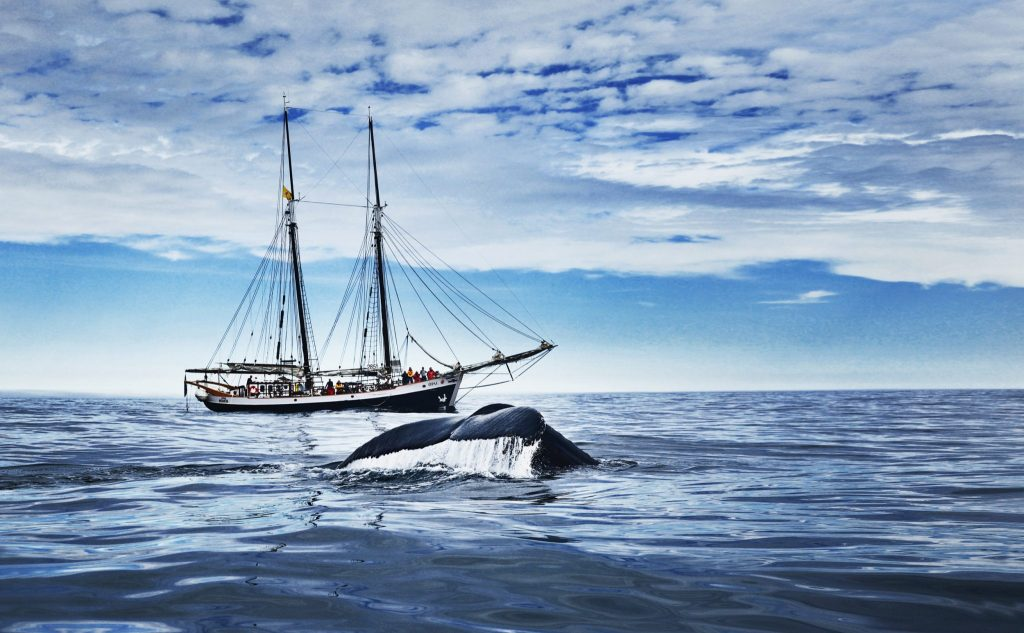 Schooner whale watching