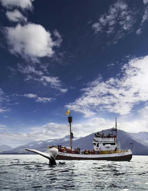Skjálfanda bay whale watching