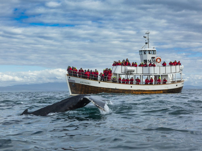 Whale watching boat Húsavik