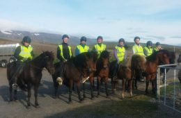 Galsi Horse Rental