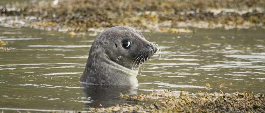 Watching seals North Iceland