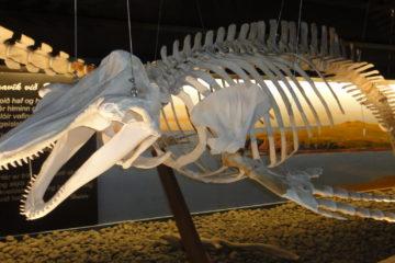Húsavik Whale Museum