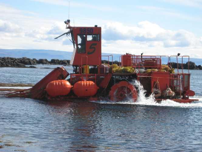 Seaweed farming Iceland