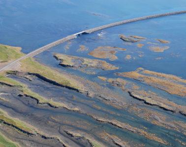 Icelandic Seaweed