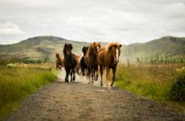 Sólhestar Horse riding tours