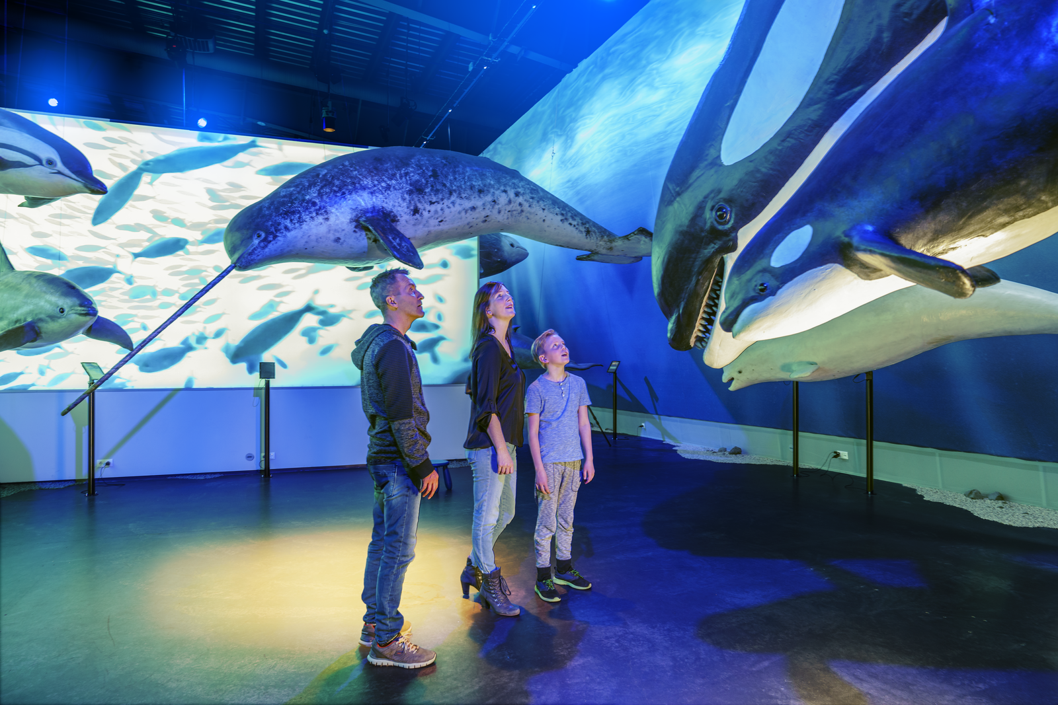 冰岛鲸鱼展