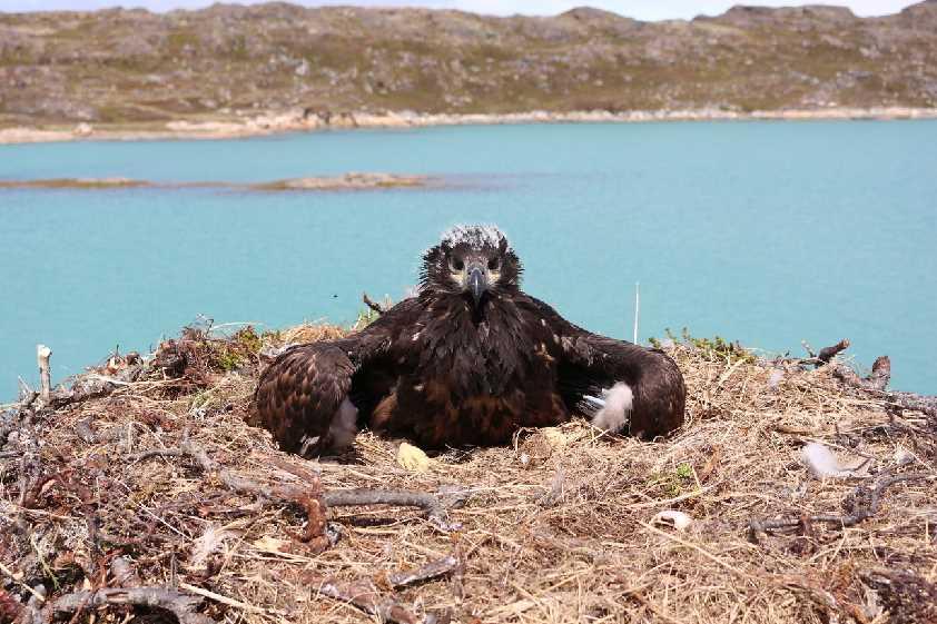 Greenland-Wildlife